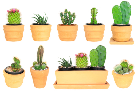 cereus: Many type of cactus ( isolated background ) Stock Photo