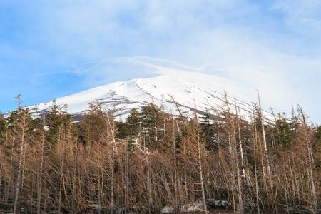The top of Fujiyama and dry tree in Japan Zdjęcie Seryjne