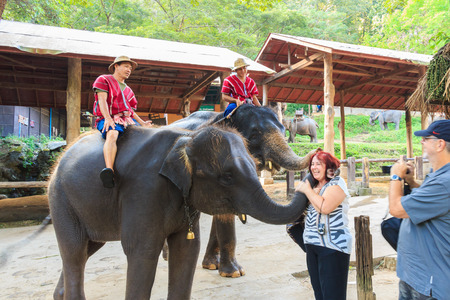 foreigner: Chiangmai ,Thailand - November 16 : mahouts ride a elephants and greet foreigner on November 16 ,2014 at Mae Sa elephant camp ,Chiangmai ,Thailand