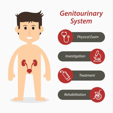 sistema genitourinario y el icono de línea médica (diseño plano)