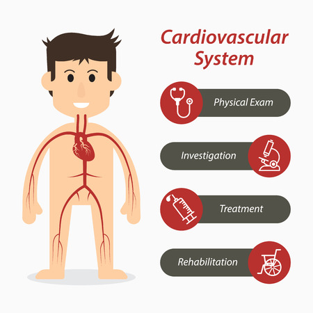 Cardiovascular system and medical line icon