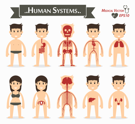 vessel: Human systems ( gastrointestinal or digestive , skeletal , cardiovascular or circulatory , respiratory , gynecological , neurological , hepatobiliary , genitourinary ) ( flat design )