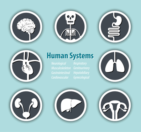 musculoskeletal: Human Systems Icon . ( Neurological . Musculoskeleton . Gastrointestinal . Cardiovascular . Respiratory . Genitourinary . Hepatobiliary . Gynecological ) . Illustration
