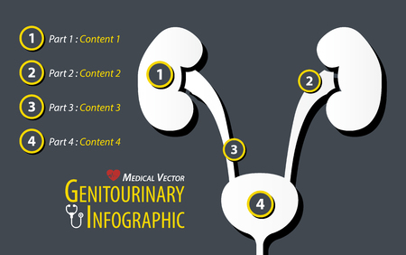 Genitourinary Infographic . Flat design . Vector Illustration