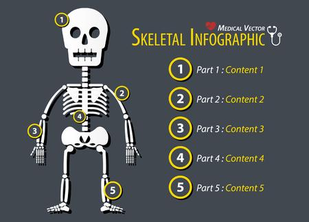 musculoskeletal: Skeletal Infographic . Flat design . Illustration