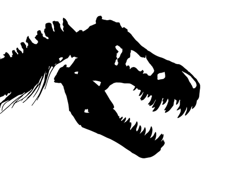 Skeleton of Tyrannosaurus rex ( T-rex ) ( Skull and Neck ) . Vector .
