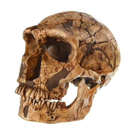 Homo neanderthalensis crâne. (La Ferrassie). Daté de 50 000 ans. Découvert en 1909 à La Ferrassie, France. Banque d'images - 87491770