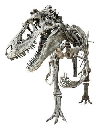 Tyrannosaurus Rex skeleton on isolated background . Stock Photo