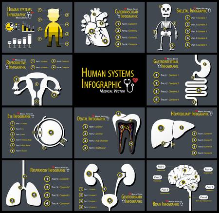 인간 시스템 infographics 집합입니다. 심장 혈관. 골격. 생식. 위장. 눈. 치과. Hepatobiliary. 호흡기. 비뇨 생식기. 신경학.