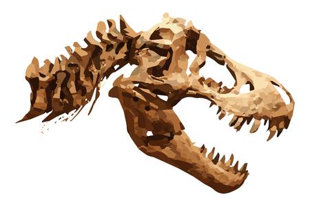 Vector skeleton of Tyrannosaurus rex on isolated background, Skull and Neck.