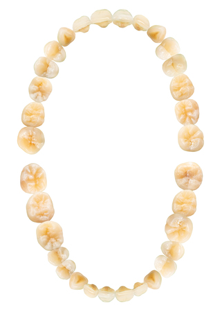 Tooth diagram ( photography ). Real teeth chart . Top view . isolated white background .