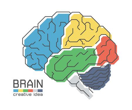 Brain anatomy with flat color design and outline stroke . Frontal Parietal Temporal Occipital lobe Cerebellum and Brainstem . Creative idea concept . Vector Illustration