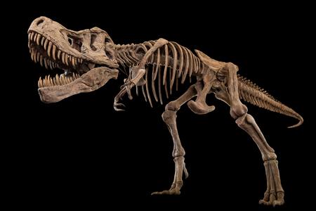 Tyrannosaurus Rex skelet op geïsoleerde achtergrond. Ingesloten uitknippaden.