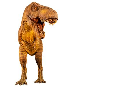 Tyrannosaurus rex ( T-rex ) is walking and open mouth and copy space on right site . Front view . White isolated background . Dinosaur in jurassic period Stock Photo