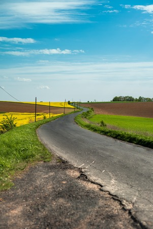 Road between rape fields