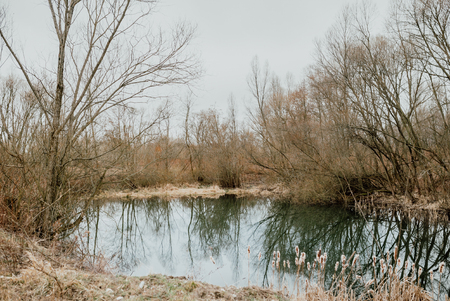 Wild lake surrounded by reeds 免版税图像