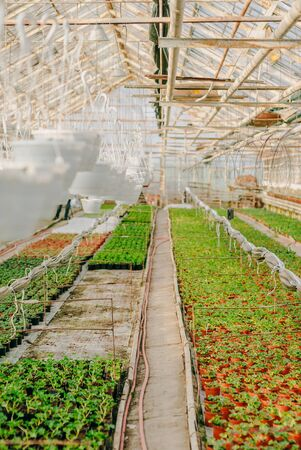 Seedings, Flowers and Vegetables seedings in Agriculture Greenhouse at Organic Farm