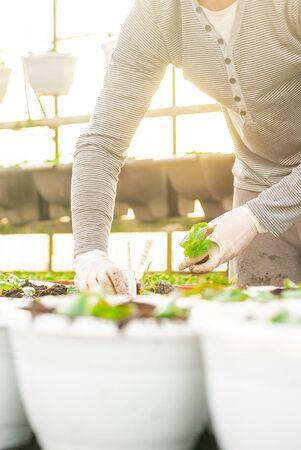 Male Botanist Planting Saplings In Pots