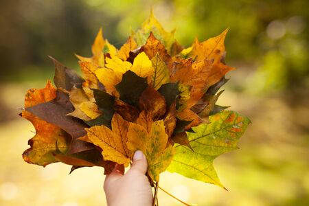 girl hold in hand yellow bouquet leaves. Walking in Park on fresh air, healthy lifestyle. maple leaves in hand. Trendy autumn 写真素材