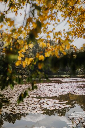 yellow leaves against pond on sunny day