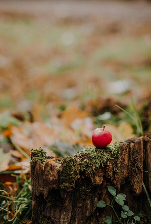 Apple on stump, fresh and healthy food, autumn time