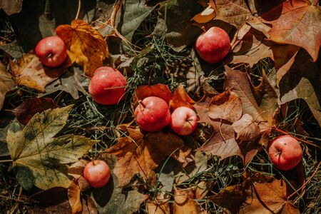Red apples with yellow leaves on grass, autumn background