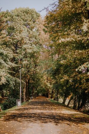 Walk Patch in city park, sunny autumn day 写真素材