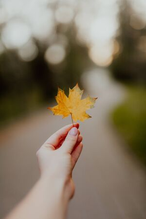 girl hold in hand single leaf. Walking in Park on fresh air, healthy lifestyle. maple leaves in hand. Trendy autumn
