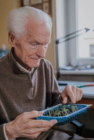 Senior observes sprouts of green vegetables Banque d'images