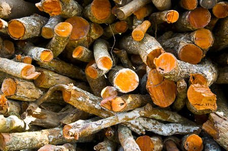Firewood for use as fuel in winter
