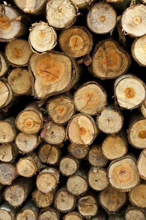 Firewood for use as fuel in winter.