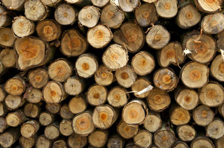 timber cutting: Logs from a tree on timber cutting. Stock Photo