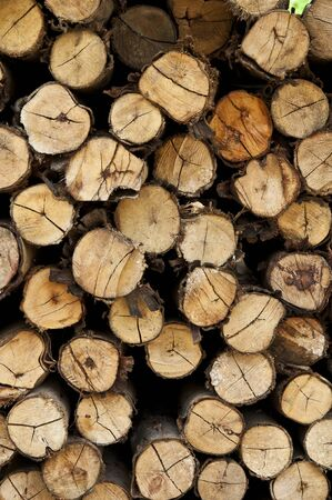 Logs from a tree on timber cutting. Stock Photo