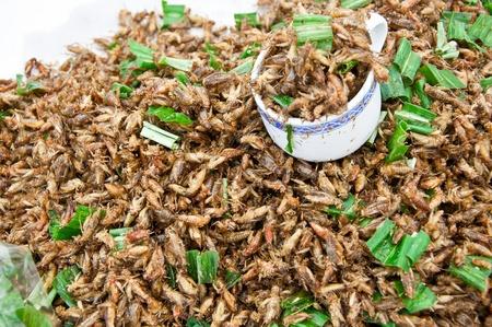 Heap of fried criket, it Stock Photo