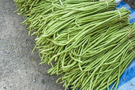Heap of Yard Long Bean on Sale  at  Farmer photo