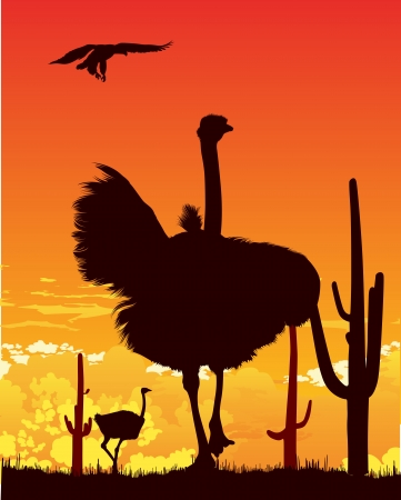 Wild ostriches and eagle among the cacti on the hot sunset background Vector