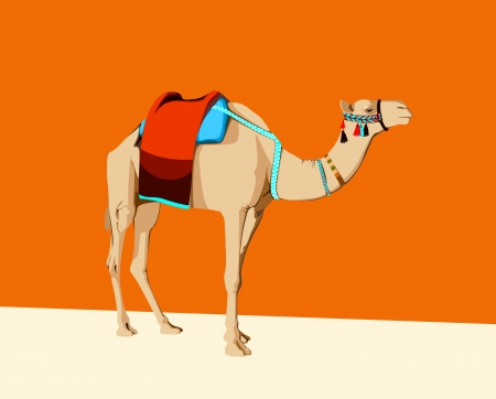 saddle: camel with a saddle on an orange background Illustration