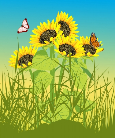 Floral summer card with sunflower and butterfly Vector