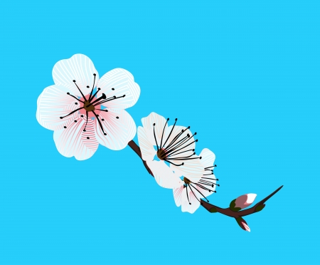 orchid flower on a blue background Vector
