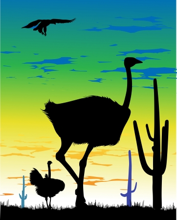 steppe: Ostriches in the steppe and eagle in the sky in South America