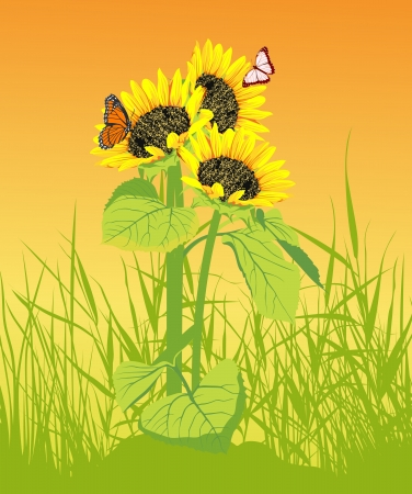 Sunflower in the grass with butterflyl on the yellow background Vector
