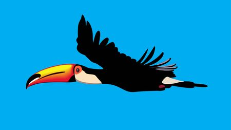toucan parrot in flight against a blue background Vector