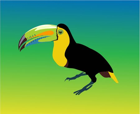 variegated: Variegated tucanucu parrot on the multicolour background
