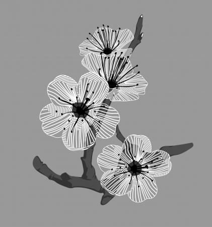 white orchid flowers on a branch on a gray background Vector