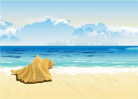 sea horizon: sea shell lies on the horizon of the sea