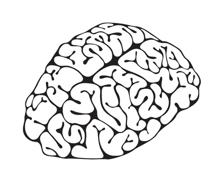 Figure brain closeup on white background Vector