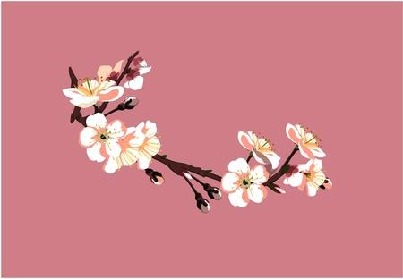 Sakura Blume auf rotem Hintergrund