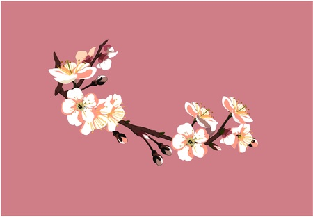 flor de sakura: Sakura flores sobre fondo rojo Vectores