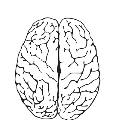 frontal view: pbrain a top view