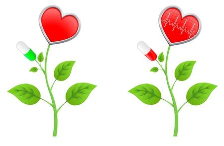 bosom: tallo verde con las hojas con un coraz�n rojo y un diagrama Vectores